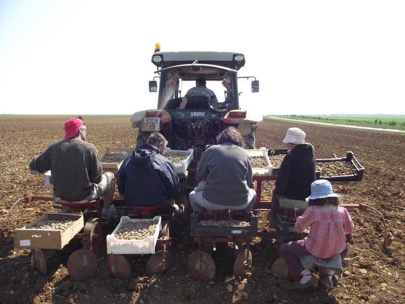 Le site des bio en bourgogne earl faucheux yonne - Periode plantation pomme de terre ...